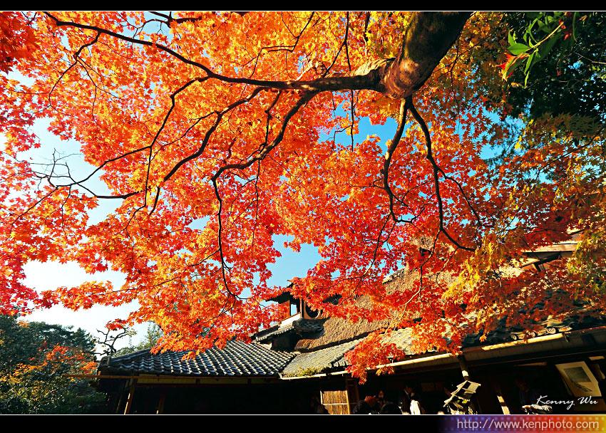 kyo-shis23.jpg