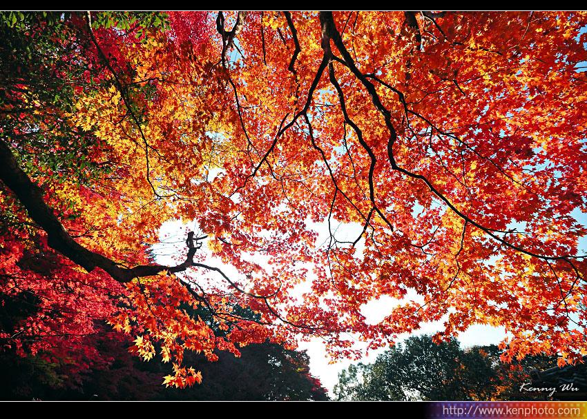 kyo-shis24.jpg
