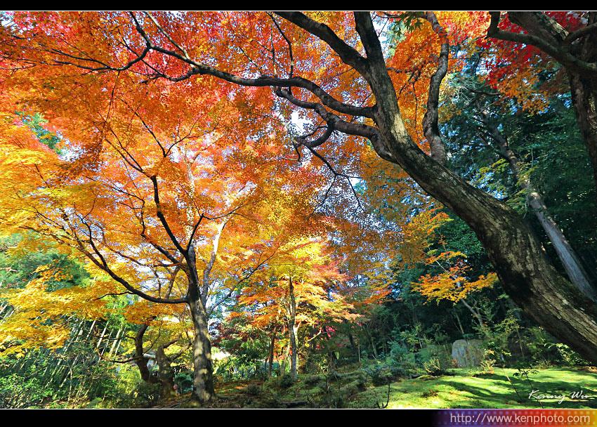 kyo-shis32.jpg