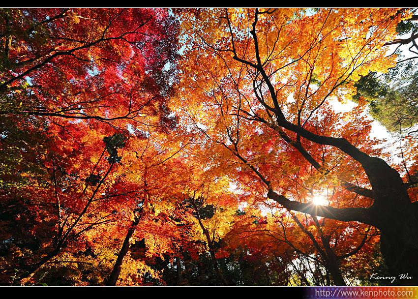 kyo-shis36.jpg