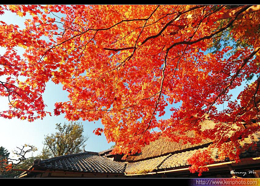 kyo-shis01.jpg