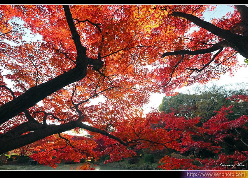 kyo-plant15.jpg