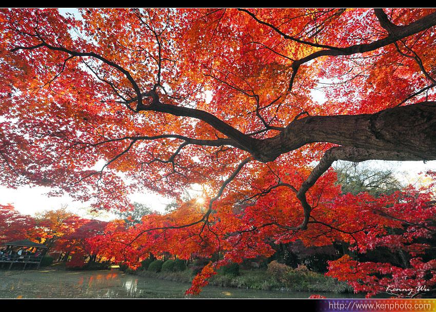 kyo-plant16.jpg
