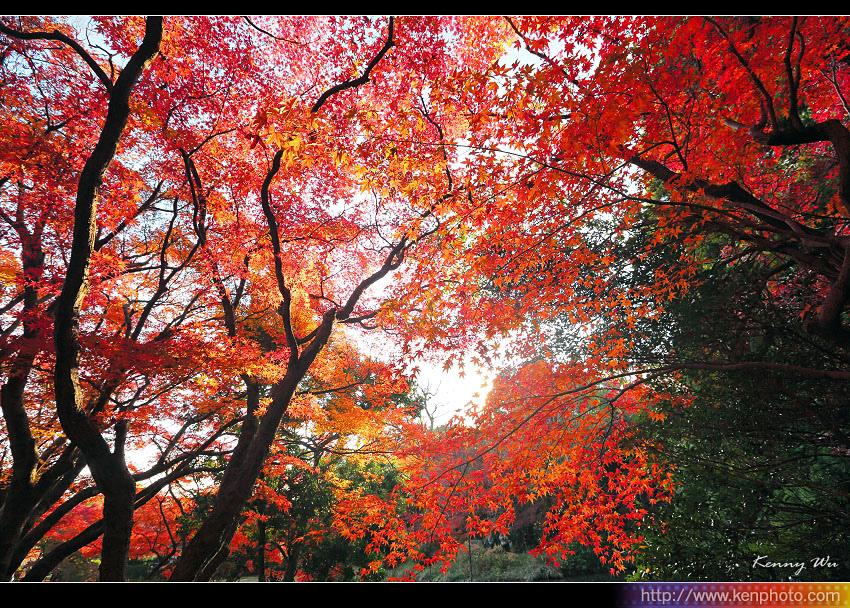 kyo-plant18.jpg