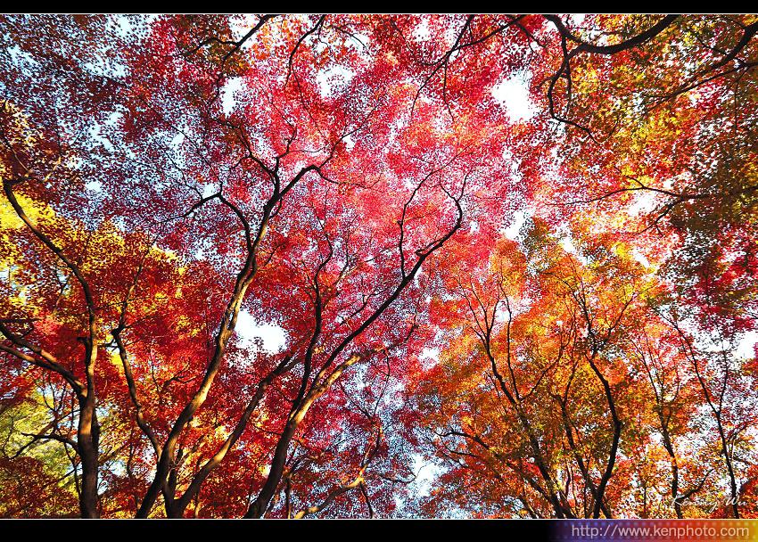 kyo-plant19.jpg