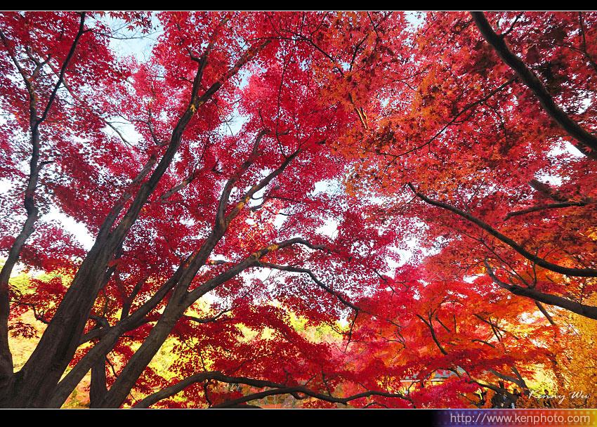 kyo-plant22.jpg