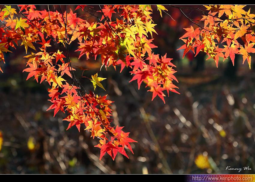 kyo-plant24.jpg