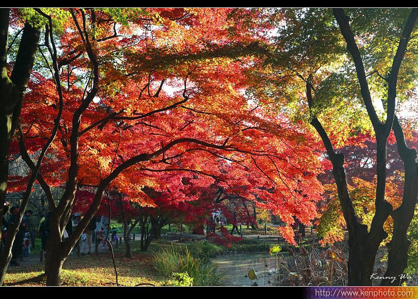 kyo-plant23.jpg