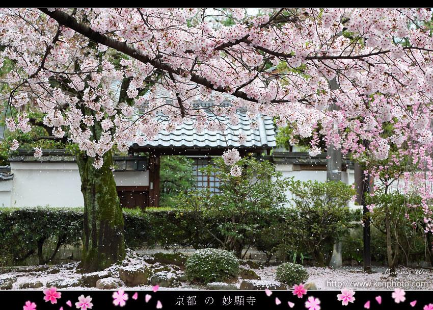 kyo-shik28.jpg