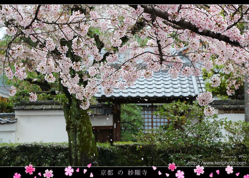 kyo-shik29.jpg