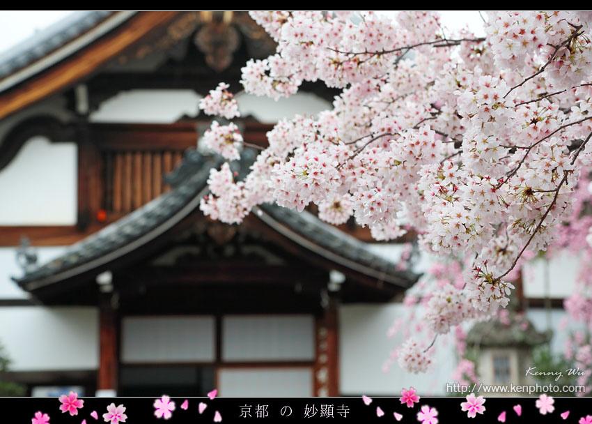 kyo-shik30.jpg