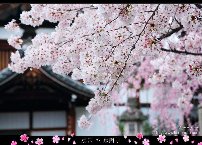 kyo-shik31.jpg