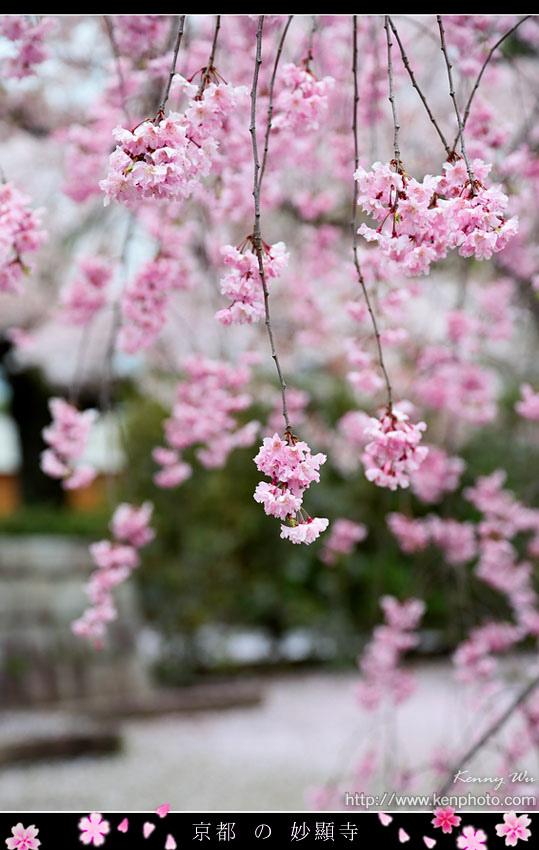 kyo-shik34.jpg