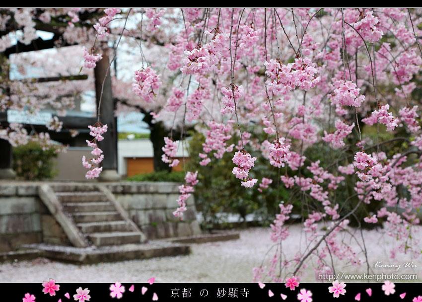 kyo-shik33.jpg