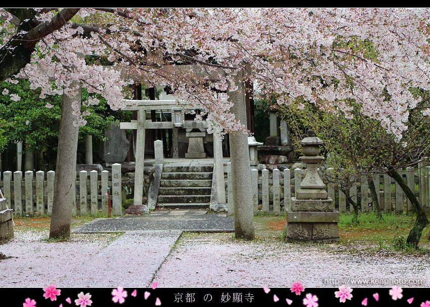 kyo-shik37.jpg