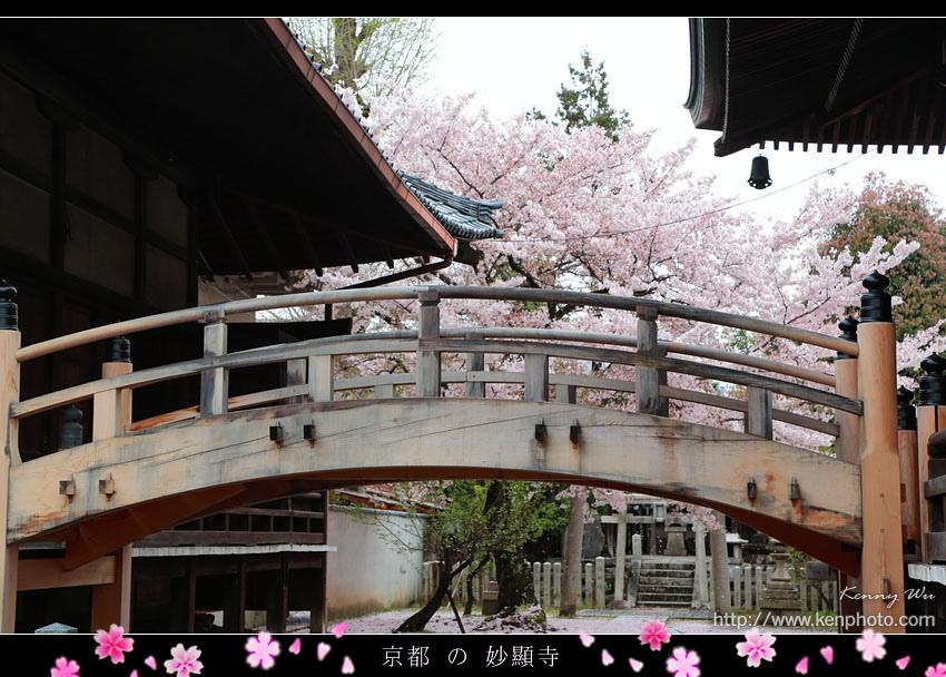 kyo-shik36.jpg