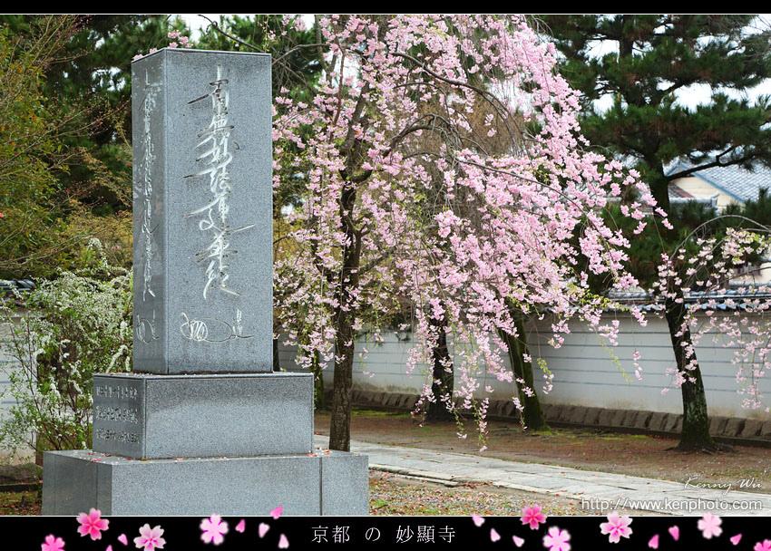 kyo-shik39.jpg