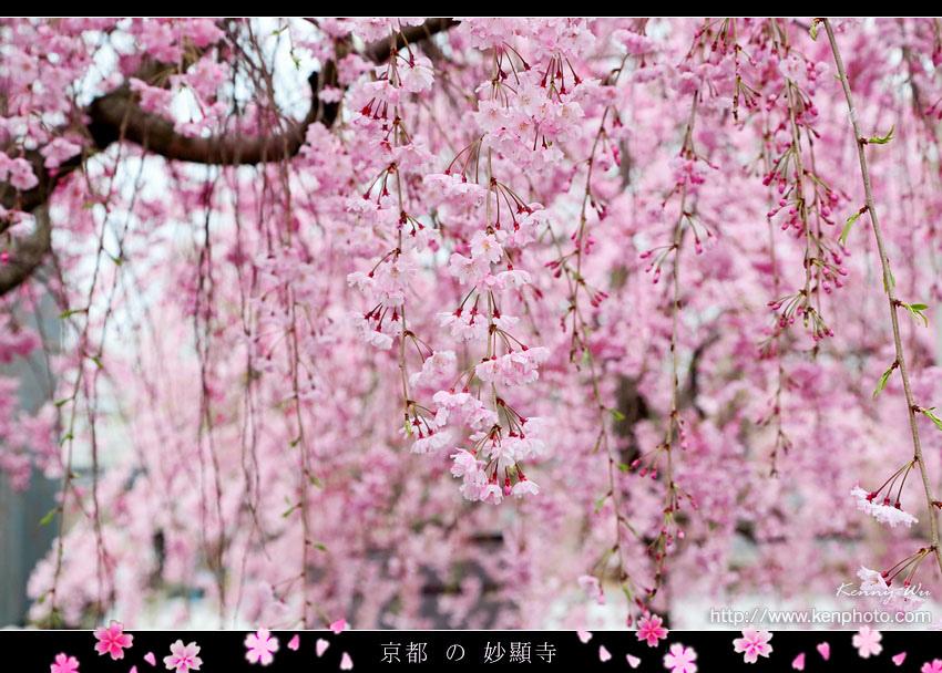 kyo-shik40.jpg