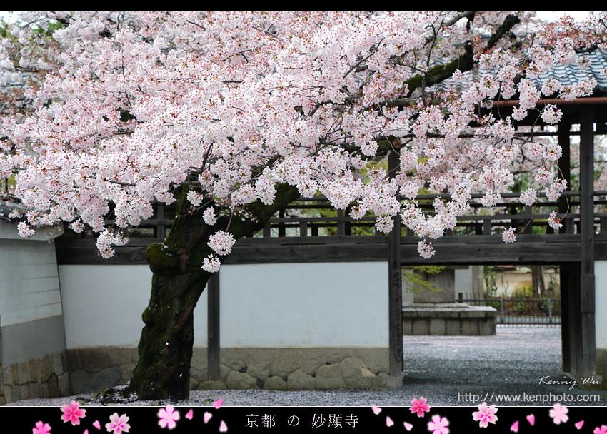 kyo-shik01.jpg