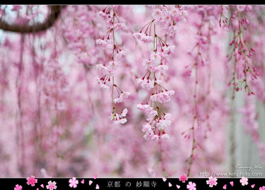 kyo-shik41.jpg