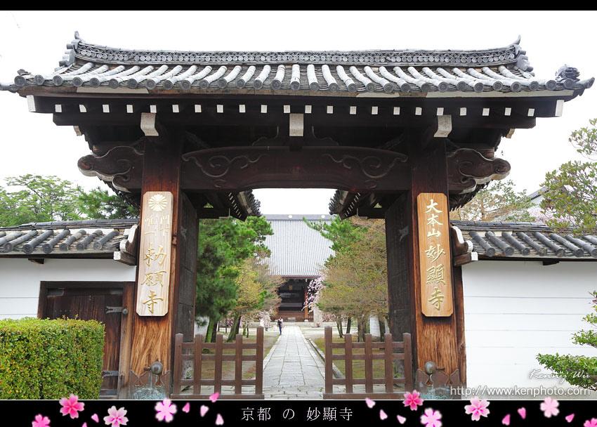 kyo-shik02.jpg