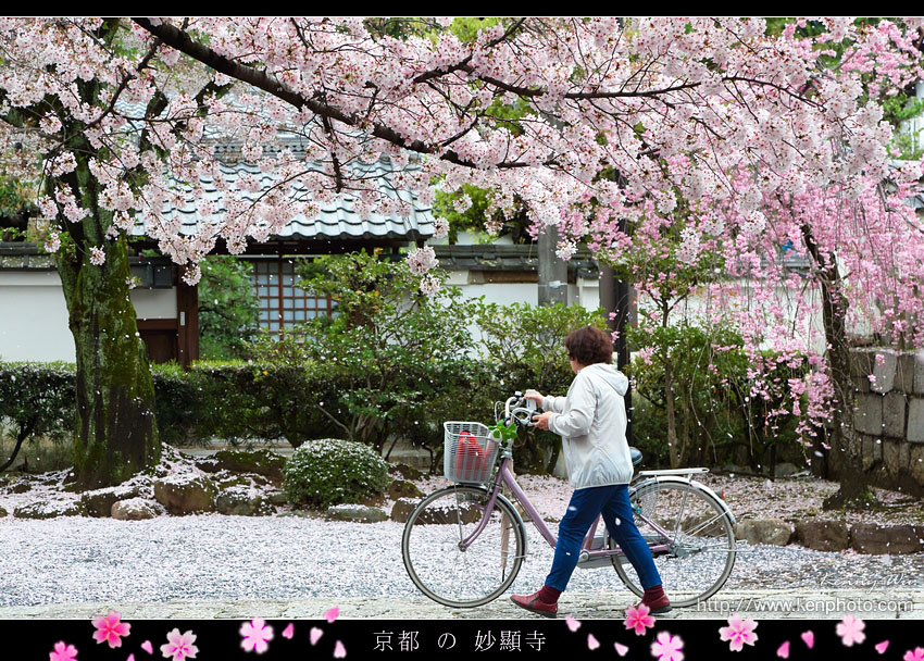 kyo-shik04.jpg