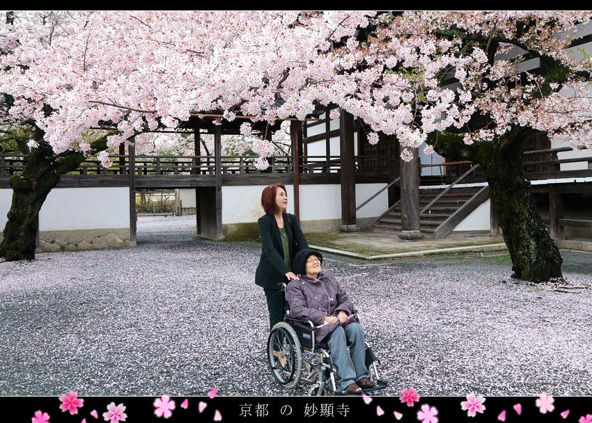 kyo-shik06.jpg