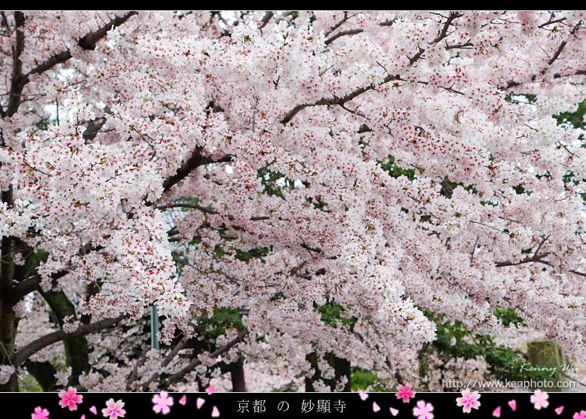 kyo-shik08.jpg