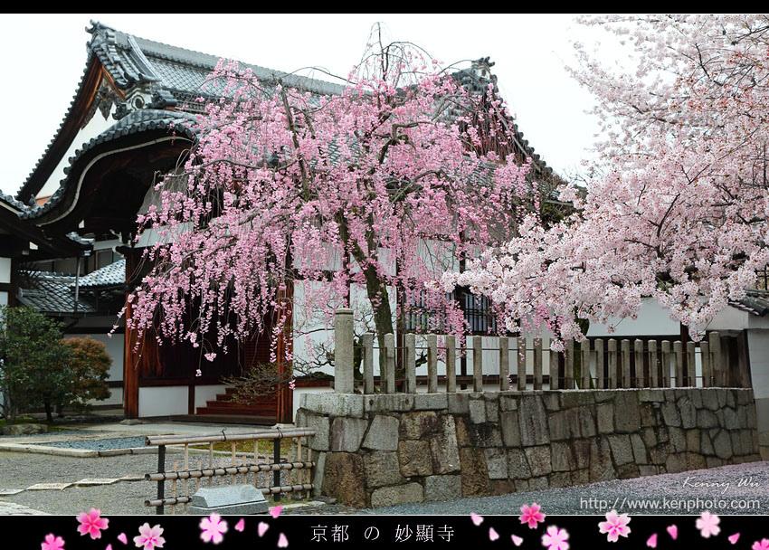 kyo-shik14.jpg