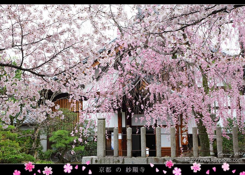 kyo-shik16.jpg