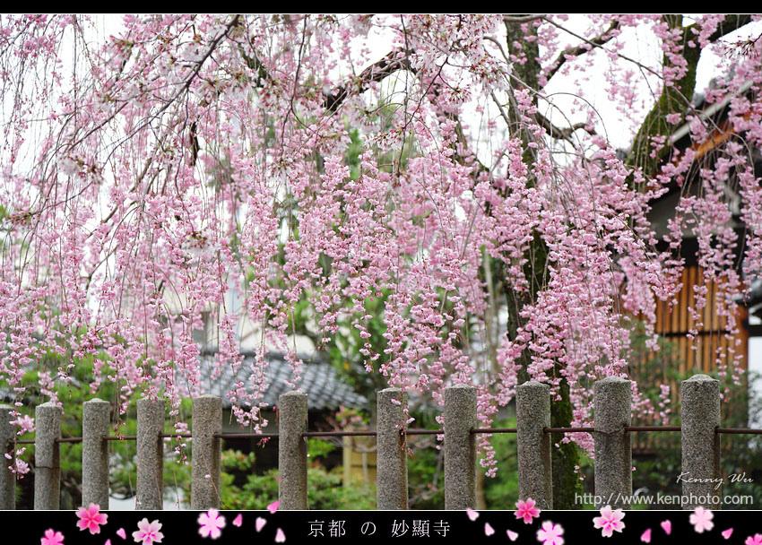 kyo-shik18.jpg