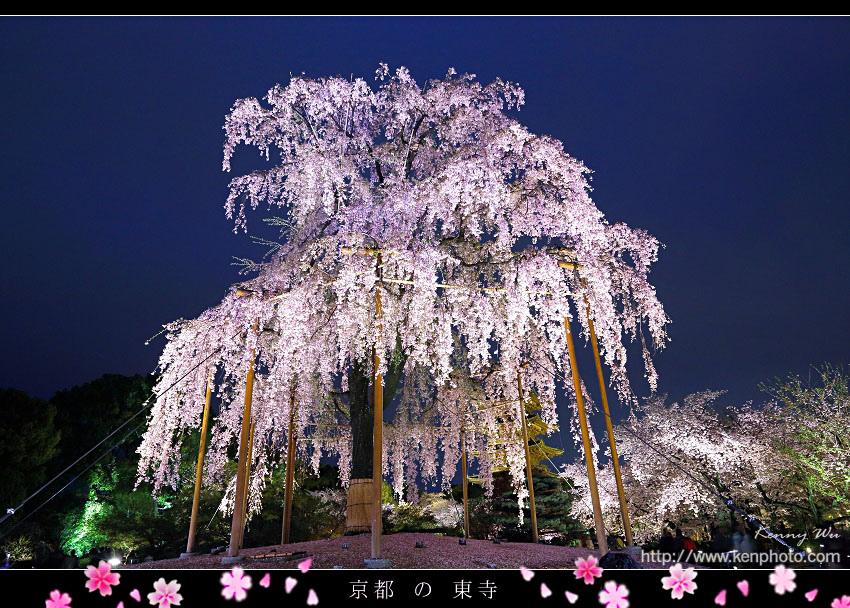 koy-toji02.jpg