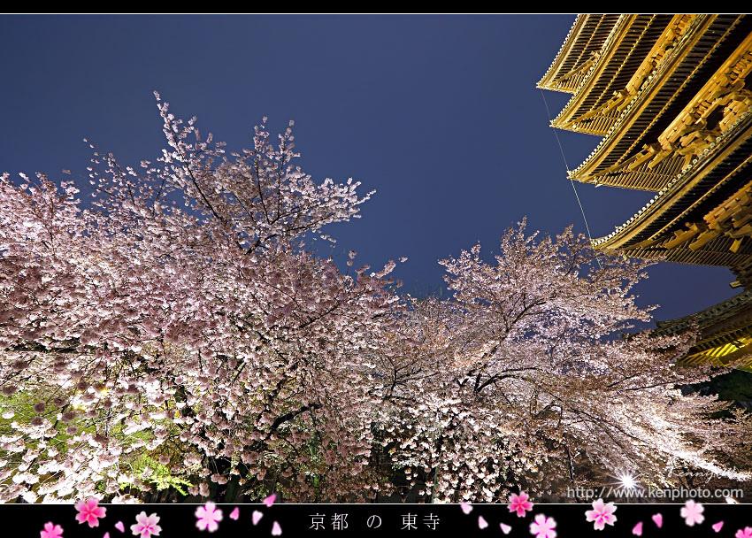koy-toji12.jpg