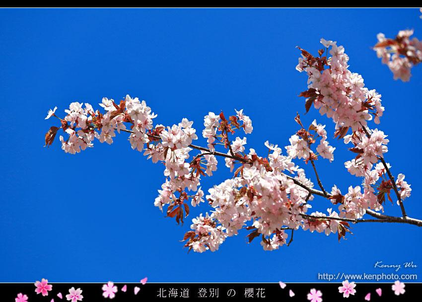 nobori33.jpg
