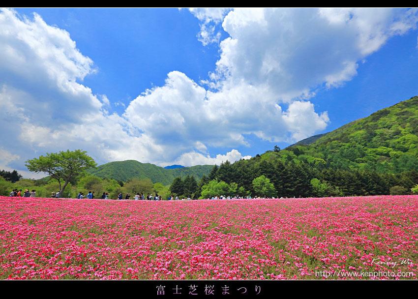 shibazak01.jpg