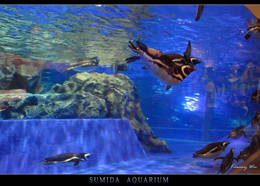 sumaqu33.jpg
