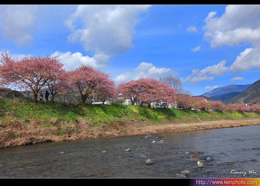 kawazu02.jpg
