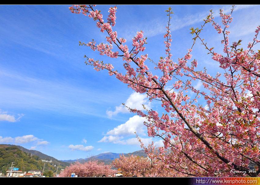 kawazu14.jpg