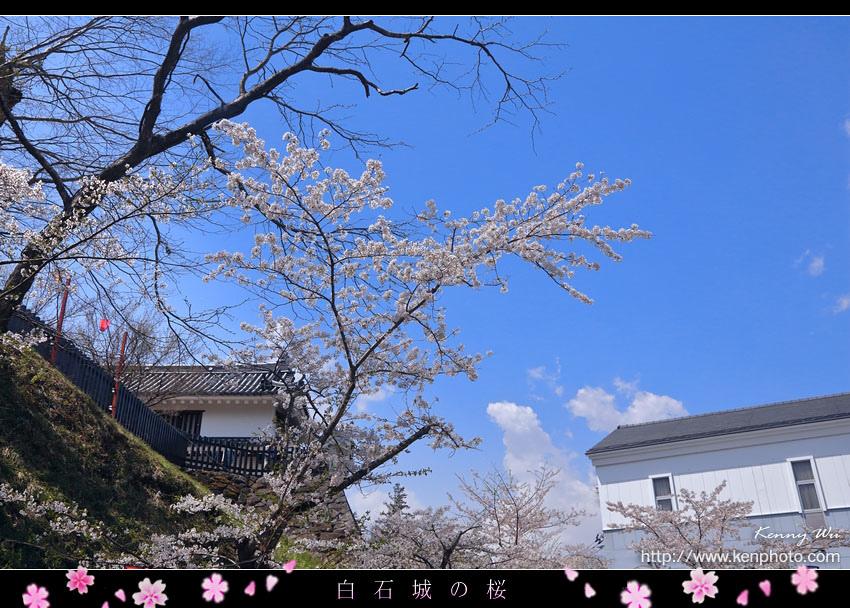 shiro03.jpg