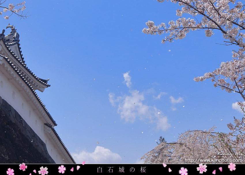 shiro05.jpg