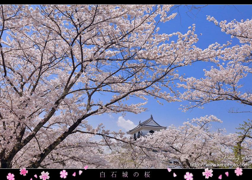shiro08.jpg
