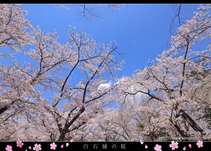 shiro09.jpg