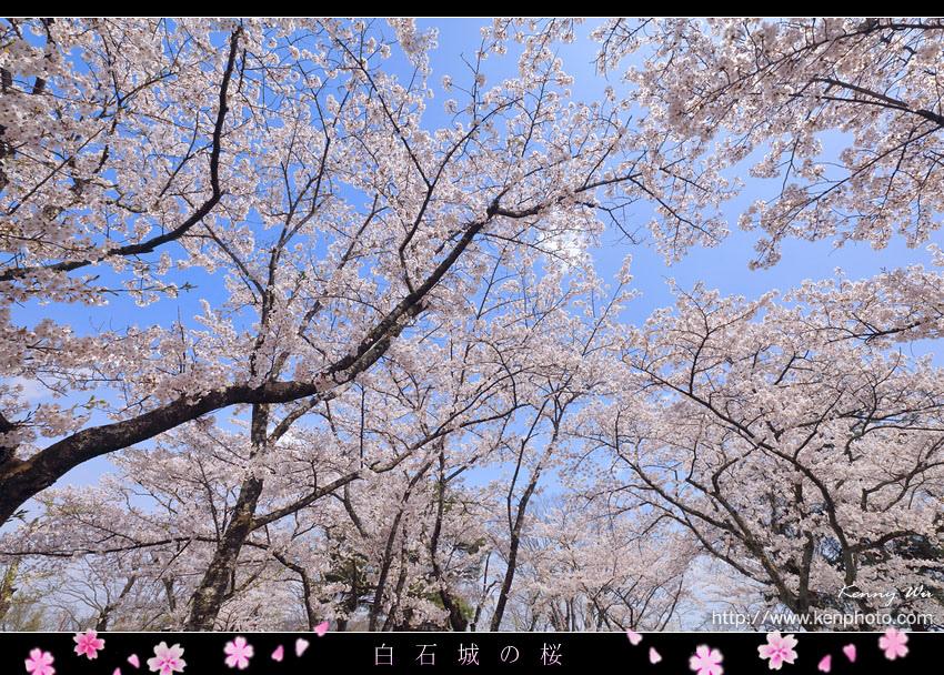 shiro19.jpg