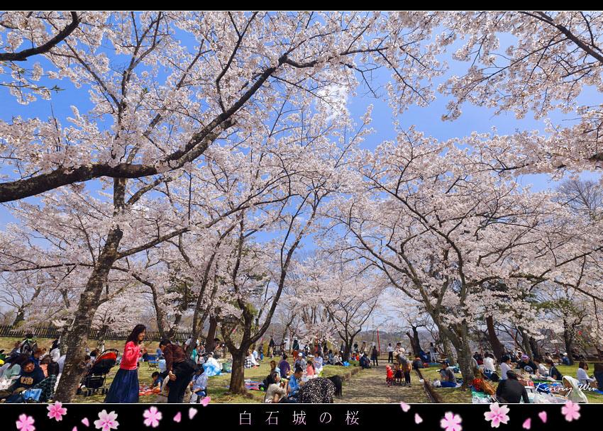 shiro21.jpg