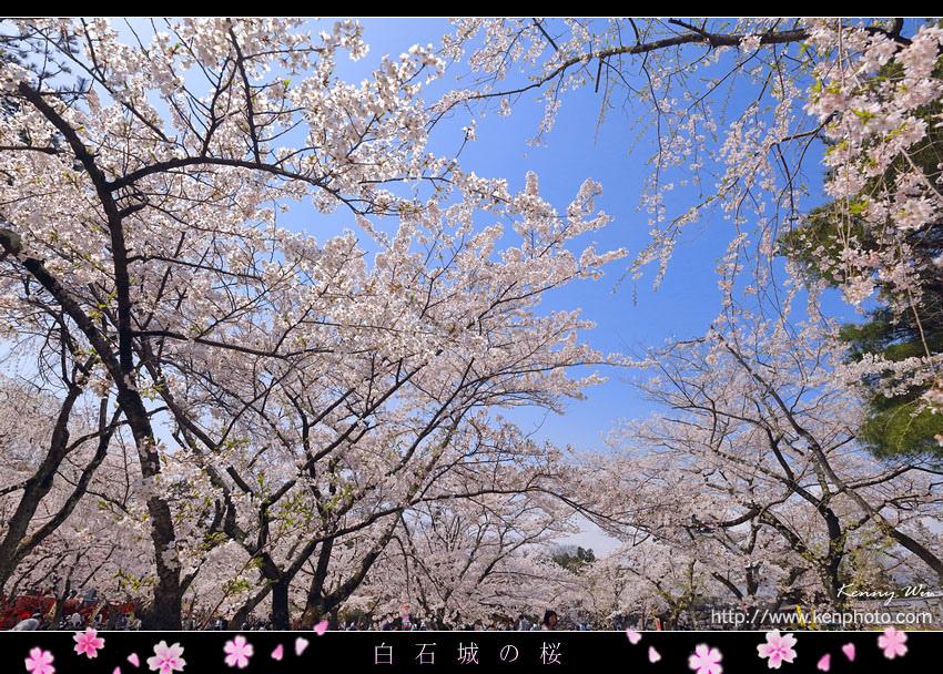 shiro30.jpg