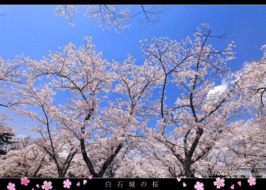 shiro31.jpg