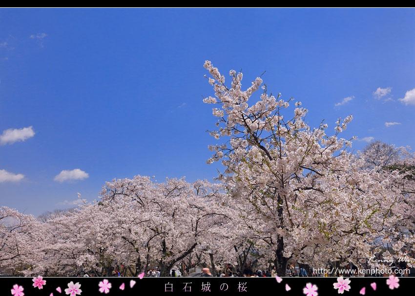 shiro35.jpg