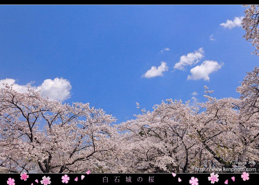 shiro34.jpg
