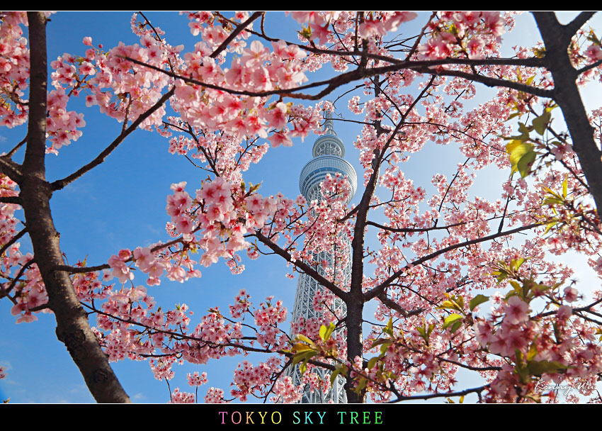 skytree29.jpg