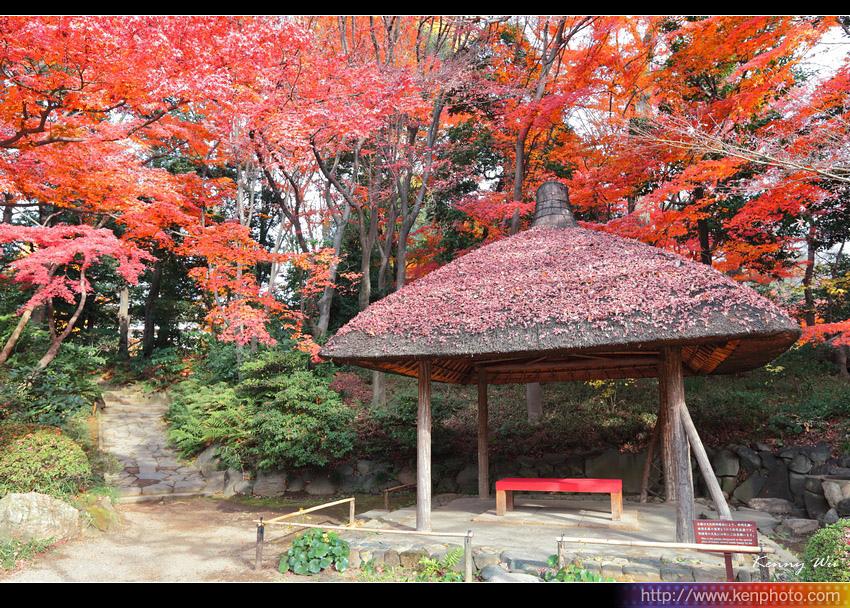 koishik24.jpg